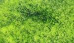 Algae - slider