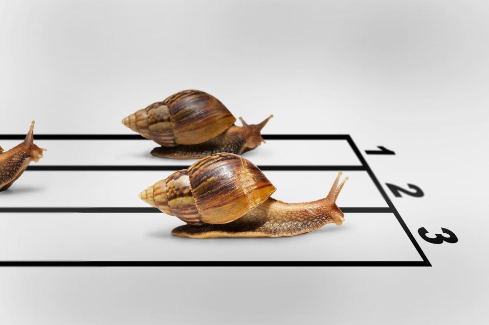 snails racing