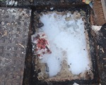 A manhole cover full of fat - Image courtesy of Severn Trent Water