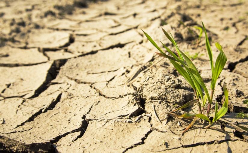 生命之水的创新(第152天)