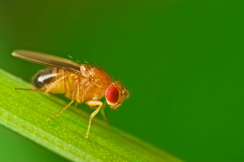 Fruit flies, canaries, wine and chemical hazards (Day 165)