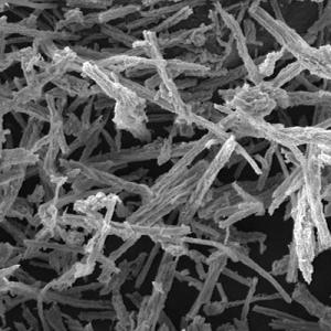 Mesoporous silica rods
