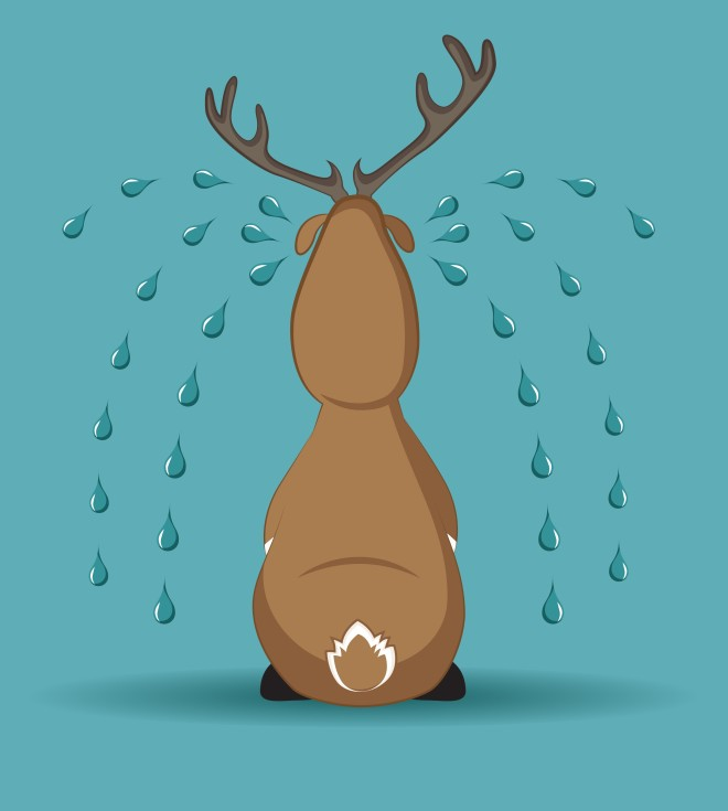 Sad reindeer