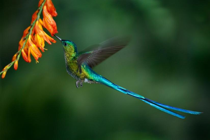 Hummingbird® propels biofuel technology into the 21st century (Day272)