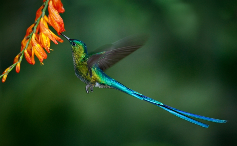 Hummingbird® propels biofuel technology into the 21st century (Day 272)