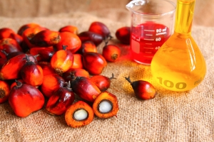 palm oil fruit and oil