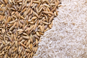rice husk and grain