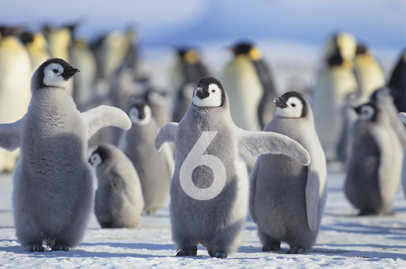Six continents but why don't penguins read my blog? (Day360)