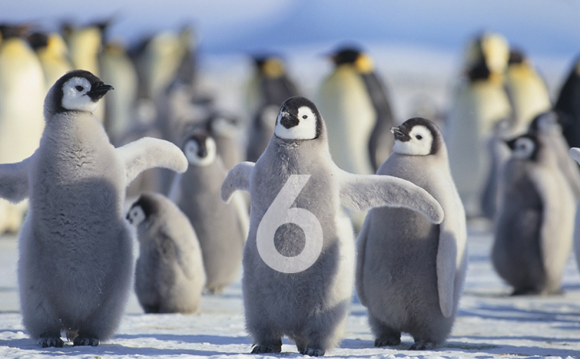 Six continents but why don't penguins read my blog? (Day 360)