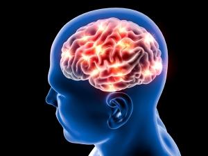 pd-brain